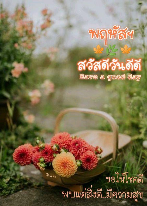 สวัสดีวันพฤหัส ธรรมชาติ ดอกไม้